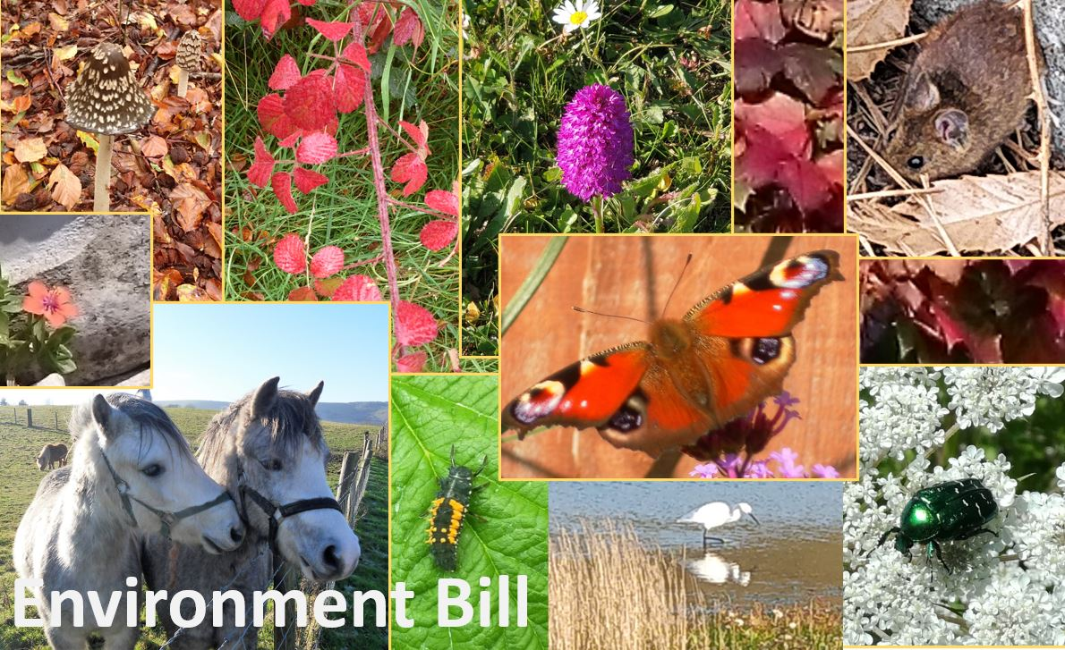 House of Lords passes 14 amendments improving the Environment Bill